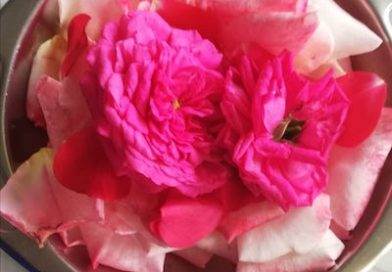 Ricette con i fiori